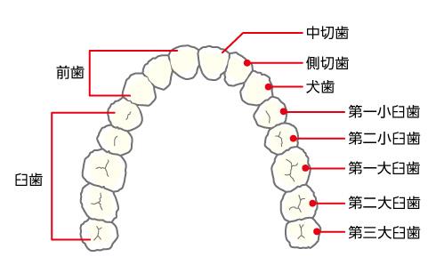 0_14_歯牙の障害.jpg